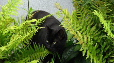 Zvláštní pokojové rostliny