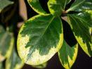 Jaké pokojové rostliny nemůžete zabít přelitím?