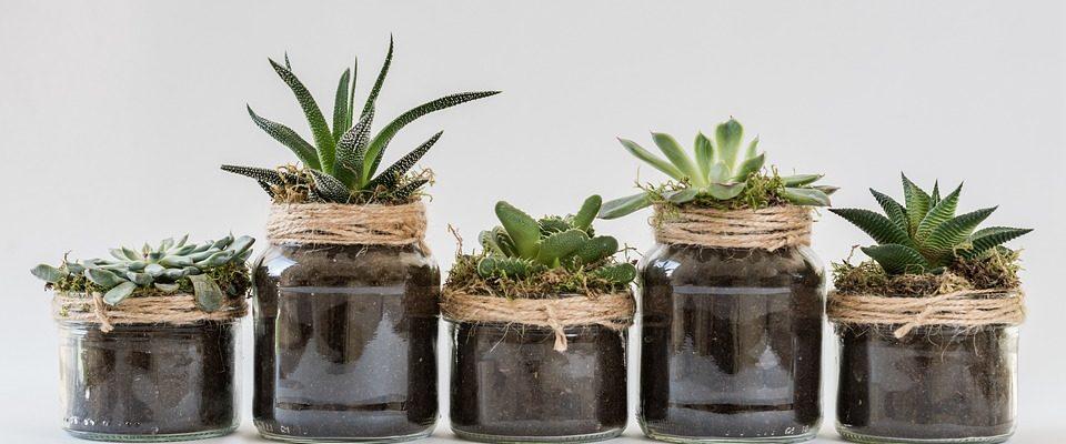 Díky jakým pokojovým rostlinám se vám bude lépe dýchat v interiéru?