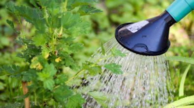 Chcete zalévat zahradu dešťovkou? Máme pro vás pár tipů