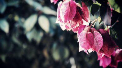 Čas podzimních květů je tady. Jakými rostlinami ozdobit okenní parapet?